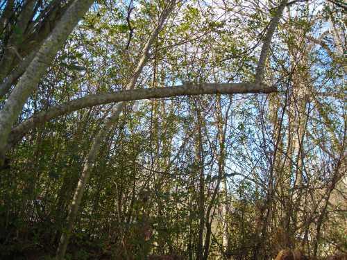 Backyard Woods