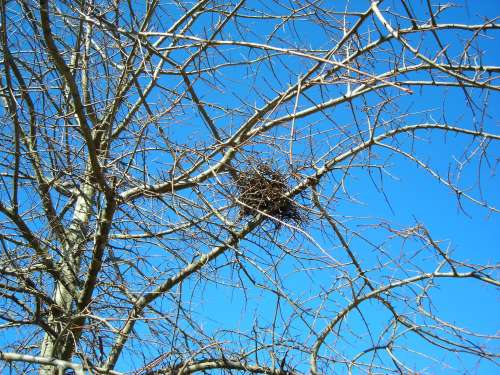 Winter Tree Series... Bird's Nest