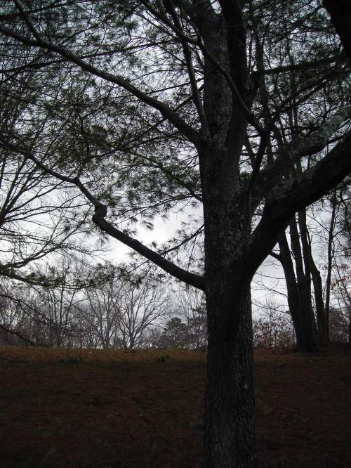 Winter Trees at Dusk