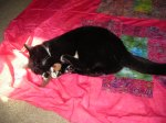 Tux helps design the quilt top...
