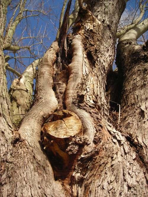 Winter Tree Series